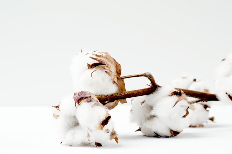 Tout ce qu'il faut savoir sur le coton biologique
